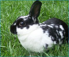 Rabbits | thatpetplace.com #SmallAnimal #SmallPet #Rabbit #Rabbits