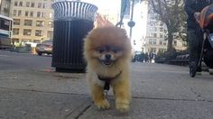 10 Hours of Walking in NYC as a Dog [Video] #nyc #newyork #bigappled