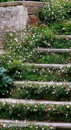 Landscaping Ideas, Garden Landscaping, Pink Perennials, Cottage Garden Design, Stepping Stones, Yard, Landscape, Amazing, Outdoor Decor