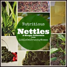 Nutritious Nettles (A Recipe Collection) :: LittleOwlCrunchyMomma