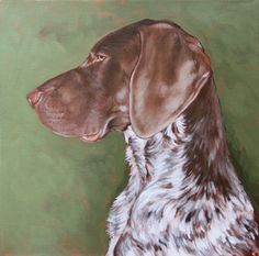 """""""Max"""" german short haired pointer"""
