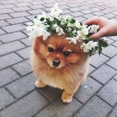 To be honest that dog looks like it could be a little mean but it's still adorable.