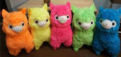 FLUORESCENT LLAMAS! They are really cute! It makes me want to get one!