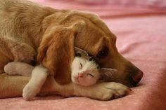 SeniorenNet - Grappig of Schattig - leven als kat en hond??? SeniorenNet - de startpagina voor senioren: de nieuwe 50-plussers
