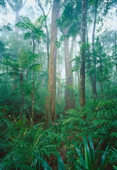 Daintree Rainforest Harmony, Cairns, Queensland, Australia   Peter Jarver Fine Art Photography