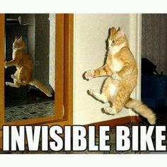 Ginger the wannabe biker