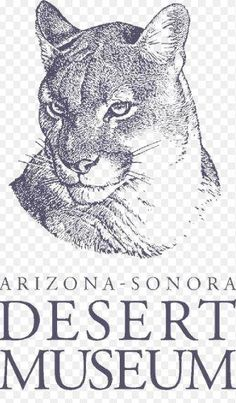 Arizona-Sonora Desert Museum listed among nation's top museums