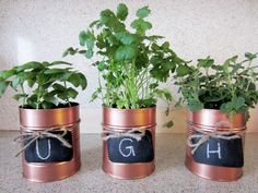 Tin Can Planters Ugh  ( I dea for Angies window sill/w a pretty tray/platter under them to hold drips?