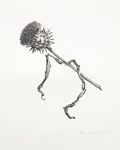⭐️A sketch of a thistle. Rory McEwen,The Colours of Reality, The Shirley Sherwood Gallery of Botanical Art, Royal Botanic Gardens, Kew, May 11?September 22, 2013 (020 8332 5655).
