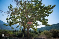 Follow the #signs ! A wooden sign hanging on a tree close to Doxa lake. #travelncycle #biketour #cyclingvacations #travelling #travel #traveltogreece #vistigreece #discovergreece #cycling #nature
