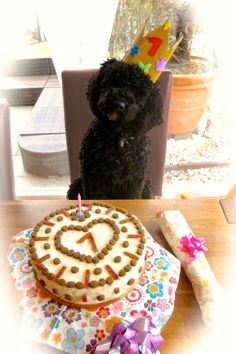 Hundekuchen The perfect dog cake Birthday cake for dogs recipe with picture and simple step-by-step instructions: potatoes, carrots and apple … Pumpkin Recipes For Dogs, Oreo Cake Recipes, Pumpkin Cake Recipes, Homemade Cake Recipes, Dog Recipes, Homemade Dog, Dog Birthday, Birthday Cake, Birthday Design