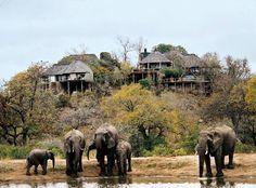 Resorts del mundo: Leopard Hills, Sabi Sands Private Game Reserve (Sudáfrica)