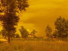 photography project: red fields