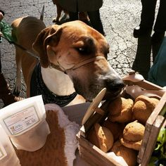 Mo can't wait to get his paws on the Biscuit Balls™! #pawsweetbakery