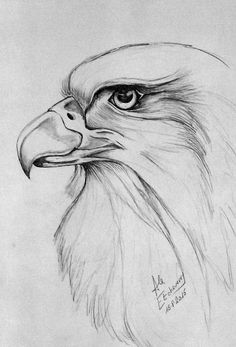 Tête d'aigle - - - recuperation bilder zitate Art Drawings Sketches Simple, Animal Sketches, Bird Drawings, Pencil Art Drawings, Animal Drawings, Cool Drawings, Disney Drawings, Amazing Drawings, Eagle Drawing