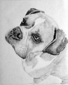 Custom pet portrait of family boxer dog. Follow link for more information about ordering your own custom pet or equine artwork. Perfect gift for the pet lover or horse lover.