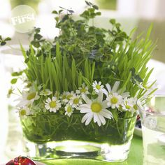 This mini tabletop garden-style bouquet set in a chic glass container features surprising tiers of plants (clover and wheatgrass) and cut...