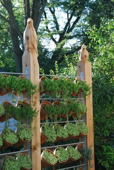 vertical garden, privacy fence - I would love to do this with herbs.
