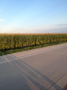 MmmmHmmm...Nebraska corn