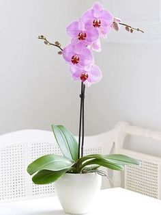 How to Grow Orchids ~ So I am here to dispel the notion that you can't grow orchids. Forget the snobby attitude we all assumed surrounded this regal and sophisticated plant! Here is how to grow orchids, even for beginners! Hawaiian Home Decor, Hawaiian Homes, Phalaenopsis Orchid, Orchid Plants, Orchids Garden, Orchid Flowers, Garden Plants, Indoor Plants, Orchids In Water