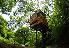 #Casas en el árbol #Arquitectura con raíces en la que vivir a varios metros del suelo  #FridayFinds #treehouses