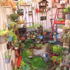 ブリキ缶/かご/ダイソー/板壁DIY/ジャンクガーデン/大阪ロハスの戦利品♡…などのインテリア実例 - 2015-06-21 21:14:06 | RoomClip(ルームクリップ)