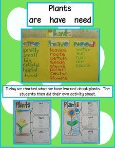 Golden Gang Kindergarten: Plants Are, Have, Need