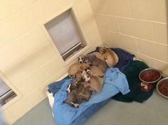 Please help; the shelter is overcrowded, and that means dogs could be euthanized.