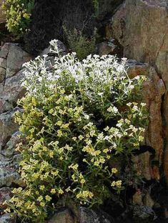 + bush monkeyflower -- will tolerate very little moisture and full or part shade, California native