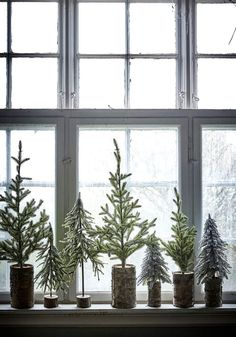 Christmas trees on window ledge.
