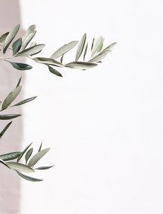 ideas for olive tree illustration design art prints Aesthetic Iphone Wallpaper, Aesthetic Wallpapers, Plant Wallpaper, Deco Floral, Tree Illustration, Trendy Tree, Olive Tree, Leaf Art, White Aesthetic