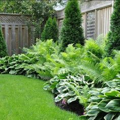 Florida Plants Landscaping, Privacy Landscaping, Backyard Plants, Outdoor Plants, Front Yard Landscaping, Outdoor Gardens, Landscape Design, Garden Design, Shade Tolerant Plants