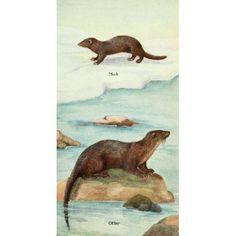 North American Mammals 1928 Mink & Otter Canvas Art - Olive Otis (18 x 24)