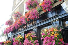 I imagine the pub Evie and Edmund visit in Belgravia looking similar to this one. The Star Tavern, Belgravia, London, UK Hidden London, Pubs And Restaurants, Stars, Gallery, Evie, Image, Beauty, Sterne, Beauty Illustration