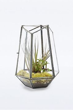 Urban Grow Open Top Terrarium - Urban outfitters