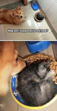 Cats are definitely the funniest pets / animals ever! Just look how all these cats & kittens play, fail, get along with dogs, get their heads stuck, react to Animals And Pets, Baby Animals, Funny Animals, Cute Animals, Funny Dogs, Funny Memes, Funny Kittens, Grumpy Cats, Animal Jokes
