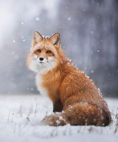 Winter by © Iza Lyson