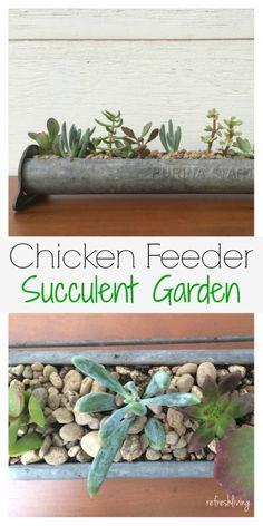 Antique Chicken Feeder Succulent Garden - Refresh Living