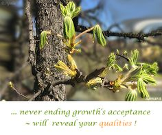 ... never ending #growth's #acceptance ~ will  #reveal your #qualities !