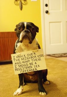 Dog Makes Shocking Confession...normally I blame bad dog behavior on the owner (including myself and our dog!) but this is too funny!