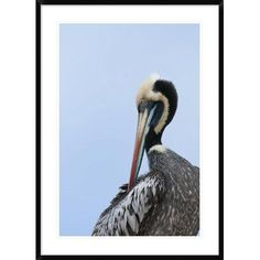 "Global Gallery 'Peruvian Pelican' Framed Photographic Print Size: 42"" H x 30"" W x 1.5"" D"