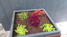 Előkert kertépítés ötletek Make It Yourself, Facebook, Plants, Plant, Planets