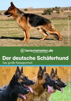 Ist der deutsche Schäferhund der Heldenhund der er mal war? Das große Rasseportrait mit allen Fakten. Schaefer, Portrait, Humor, Art, German Shepherd Dogs, Heroes, Animales, Bestfriends, Art Background