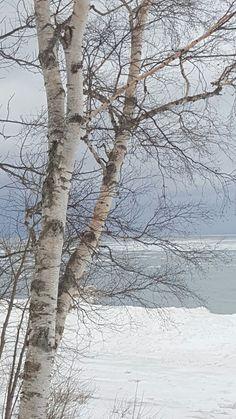 Scenic winter view beyond the trees Winter Szenen, Winter Love, Winter Trees, Winter Wonder, Watercolor Landscape, Landscape Art, Landscape Paintings, Tree Photography, Landscape Photography