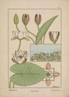 Jugend flowers pinterest jugend jugendstil und for Innendekoration 1902