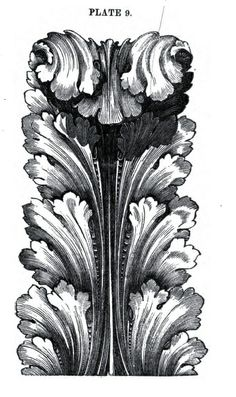 Acanthus with fold in leaf