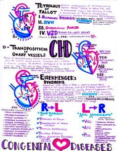 hanson's anatomy — Congenital Heart Defects becoming a nurse student, nurse sayings inspiration, nurse week ideas Cardiac Nursing, Nursing Mnemonics, Pediatric Nursing, Neonatal Nursing, College Nursing, Nursing School Notes, Medical School, Pharmacy School, Ob Nursing