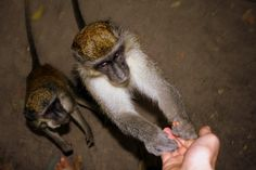 Monkeys Begging for Food from Tourists - Public Domain Photos, Free Images for Commercial Use