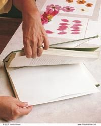 Two methods of pressing flowers work equally well. You can either insert the flowers into a old, weighty textbook. Pressing Flowers, Fine Gardening, Dried Flowers, Arts And Crafts, Flower Ideas, Diy, Preserve, Textbook, Patience