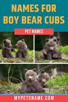The best kind of boy bear names reflect the power and strength of these magnificent beasts! Did you know, black bears can run up to 35mph?! With strong skills like that, these furry friends need powerful titles to match. Check out our list for ideas.  #bearnames #boybearnames #namesforbears Male Pet Names, Hedgehog Names, Magnificent Beasts, Name List, Bear Cubs, Cute Bears, Black Bear, Strength